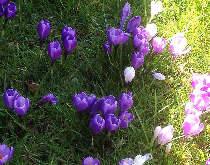 springgarden22016
