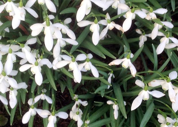 springgarden32016